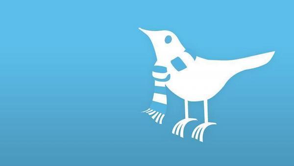 oiseau twitter avec une écharpe