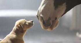 Super Bowl 2014: Top 10 des publicités les plus partagées sur les réseaux sociaux